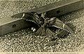 Bird lore (1918) (14754967392).jpg
