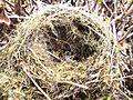Birds-Nest (2625365446).jpg