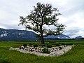Birnbaum auf dem Walserfeld.jpg