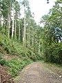 Bishop's Wood, by Polbrock Bridge - geograph.org.uk - 51009.jpg