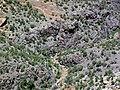 Black Canyon Formation (Paleoproterozoic, 1.759 Ga; Cold Shivers Point, Columbus Canyon, Colorado National Monument, Colorado, USA) 5 (23350855513).jpg