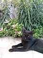 Black Cat In the Garden 6.jpg