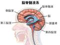Blausen 0216 CerebrospinalSystem (ja).png