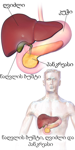 Blausen 0428 Gallbladder-Liver-Pancreas Location-ka.png