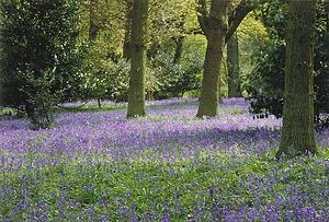 Image of Winkworth Arboretum: http://dbpedia.org/resource/Winkworth_Arboretum