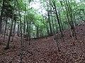 Bočná roklina - panoramio.jpg