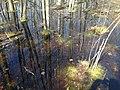 Bog Reflection (48022628076).jpg