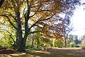 Botanischer Garten Braunschweig - Braunschweig, Germany - DSC04359.JPG