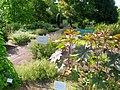 Botanischer Garten der Universität Würzburg - IMG 6819.JPG