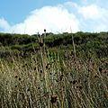 Bouddi National Park - Hill view.jpg