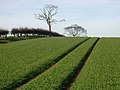 Bown Hill, Elstronwick - geograph.org.uk - 329904.jpg