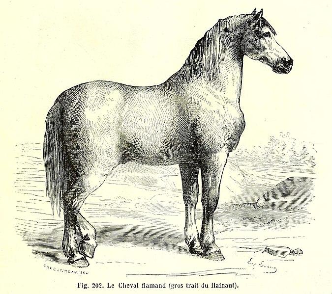 Filebrehm Cheval Flamandjpg Wikimedia Commons