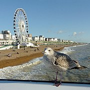 Brighton beach and seafront, with gull and wheel (geograph 3284775).jpg