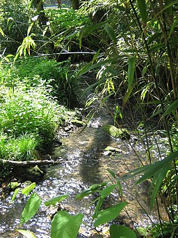 Brockhill Stream in Brockhill Country Park - geograph.org.uk - 1274562