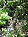 Brockhill Stream in Brockhill Country Park - geograph.org.uk - 1274562.jpg