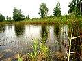 Brodivs'kyi district, Lviv Oblast, Ukraine - panoramio (127).jpg