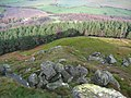 Broughton Plantation - geograph.org.uk - 341557.jpg