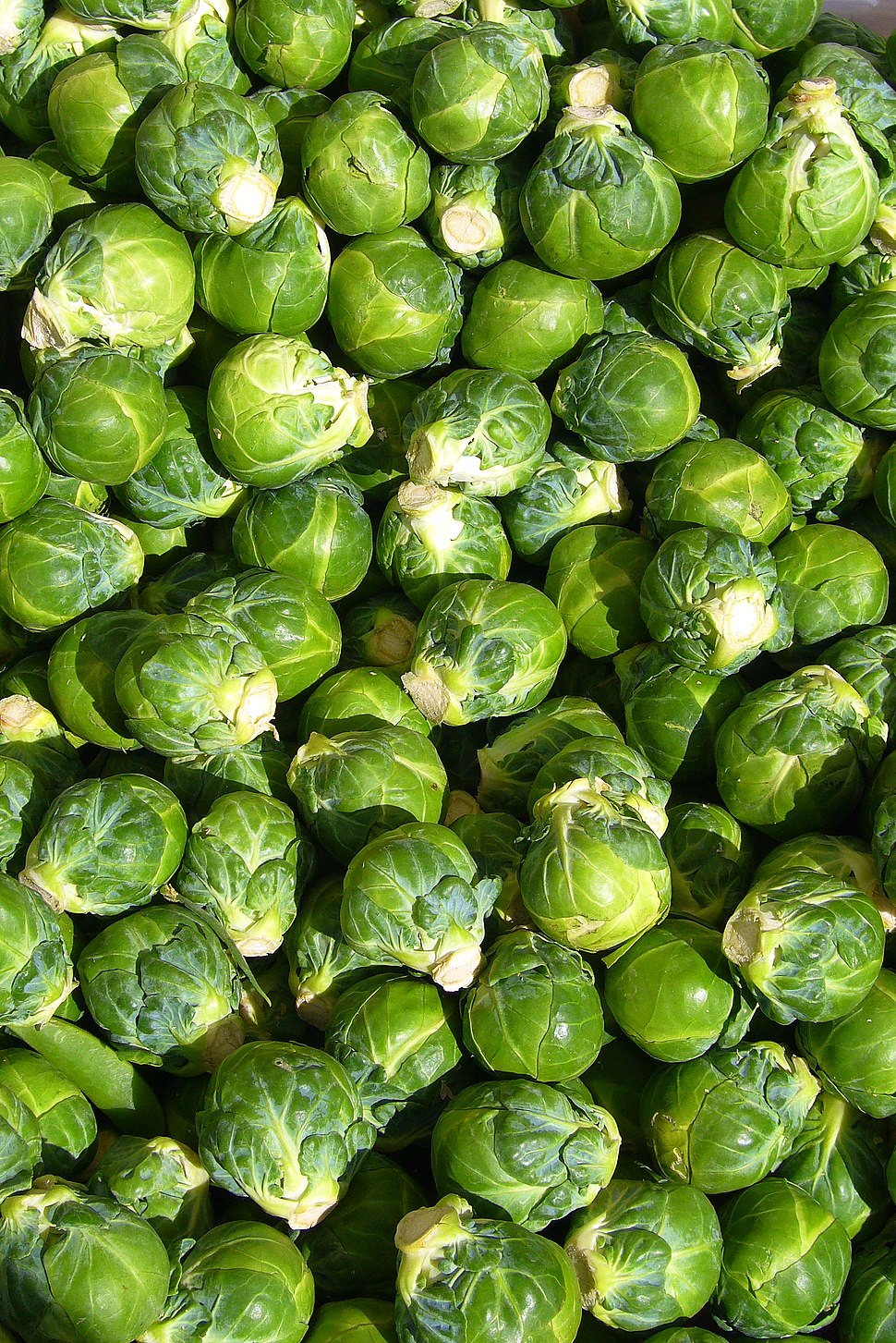 Brussels sprout closeup