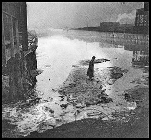 Bubbly Creek - A man standing on slaughterhouse-derived waste in Bubbly Creek in Chicago in 1911.