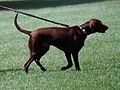 Buddy the Dog at the White House- 08-30-1998 (6461540485).jpg