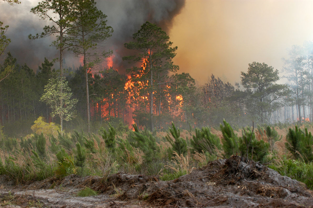 Okefenokee Fire Map.Bugaboo Scrub Fire Wikipedia