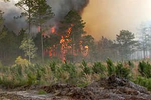 Bugaboo Scrub Fire - The Bugaboo Fire rages out of control in Lake City, Florida.