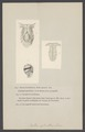 Bulla - Print - Iconographia Zoologica - Special Collections University of Amsterdam - UBAINV0274 005 03 0050.tif