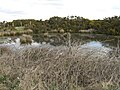 Burnthouse pond - geograph.org.uk - 730114.jpg