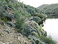 Butcher Jones Trail - Mt. Pinter Loop Trail, Saguaro Lake - panoramio (21).jpg