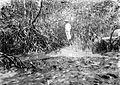 COLLECTIE TROPENMUSEUM Mangrovebos (Rhizophora- wortels) bij Pasoeroean TMnr 10012769.jpg