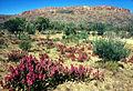 CSIRO ScienceImage 1059 Australian landscape.jpg