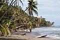 Cahuita NP-1-5 - Flickr - Ragnhild & Neil Crawford.jpg