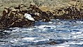 California-06430 - Seals (21730479565).jpg