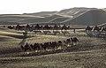 Camel convoys in Shapotou (20171005173358).jpg