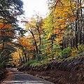 Camino a Termas de Palguin, Parque Nacional Villarrica.jpg