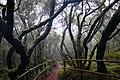 Canary Islands 2018-02-12 (38719986120).jpg