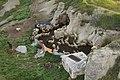 Cappadocia (5820814725).jpg