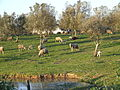Casével countryside.JPG
