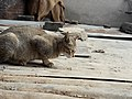 Cat 20190112 134529.jpg