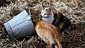 Cats on a Farm.jpg