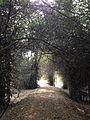 Chandaka Forest and Elephant Reserve 06.jpg