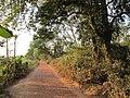 Chandraketugarh Mound - Berachampa 2012-02-24 2537.JPG