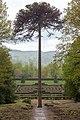 Chatsworth (48521657511).jpg