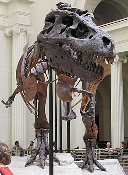 Chicago Illinois - Sue - Field Museum1