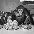 Chimpansees Hilda en Tilly uit Artis, Bestanddeelnr 917-2813.jpg