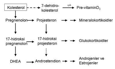 kortikosteroid wiki