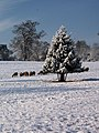 Christmas comes to Ickworth - geograph.org.uk - 1628236.jpg