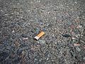 Cigarette butt on asphalt.jpg