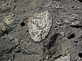 Clast-rich impact pseudotachylite (Sudbury Breccia, Paleoproterozoic, 1.85 Ga; Windy Lake Northwest roadcut, Sudbury Impact Structure, Ontario, Canada) 83 (47705836652).jpg