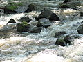 Closeup Crabtree Creek Company Mill Trail Umstead NC SP 0095 (3583855802).jpg